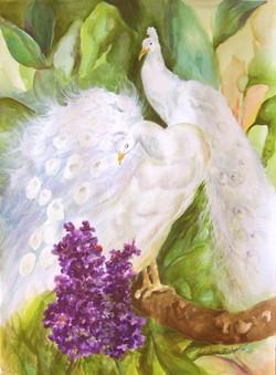 #224 White Peacocks
