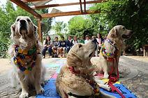 perros_y_niños.jpg
