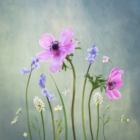 Bluebell and Anemone Garden