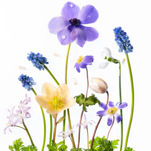 Spring Splendour HK