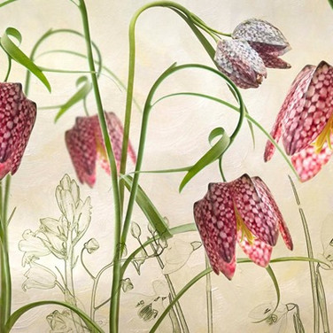 Snake Head Fritillaries