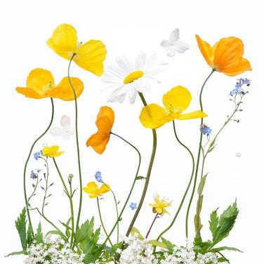 Spring Sunshine