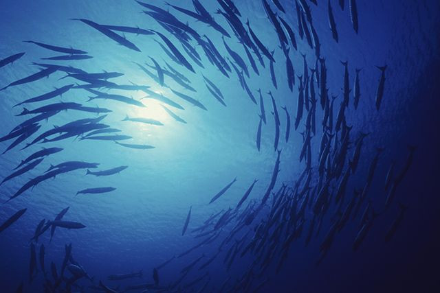 ocean life - living organism