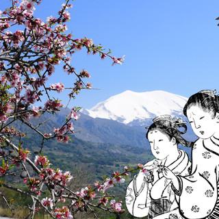 Sakura-Hommage to Kazantzakis, 2013