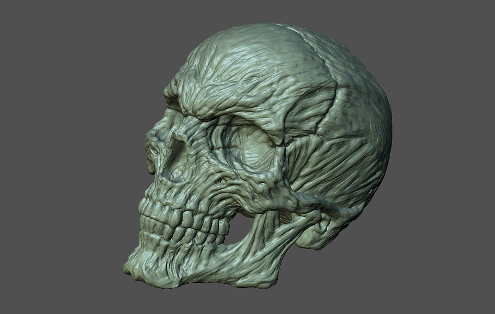 skull_002.jpg