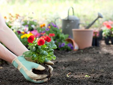 Power Monday - 栽培植物做園藝的人生哲學