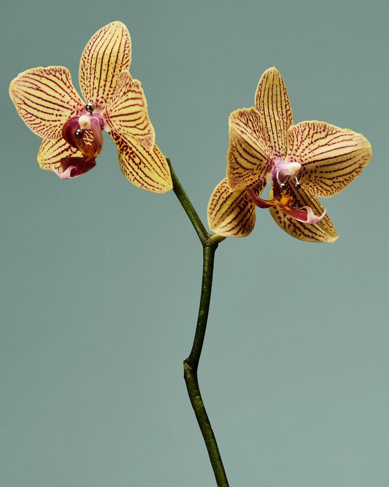 20201014_Flowers_Shot_04_Orchid_166.jpg