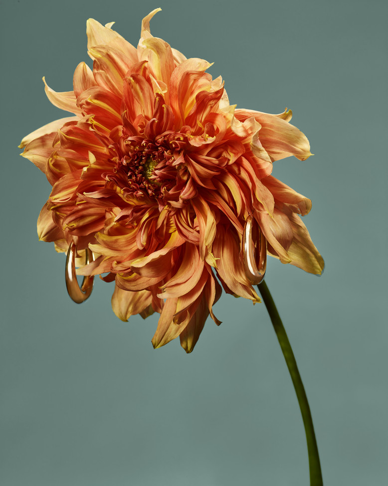 20201014_Flowers_Shot_01_Orange_034.jpg
