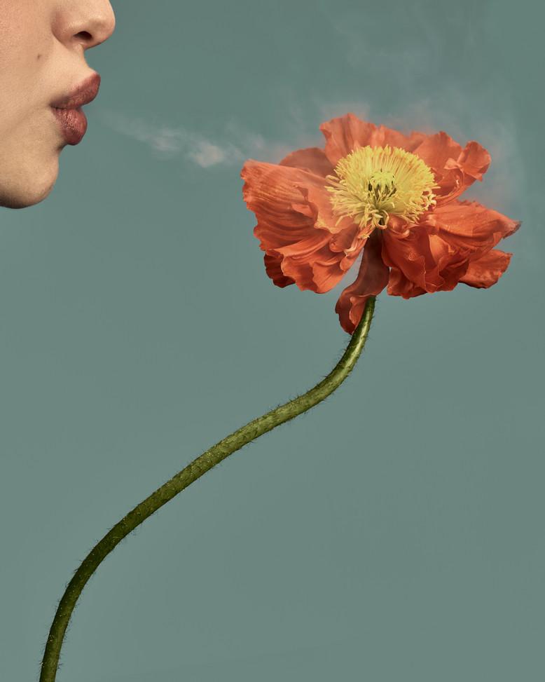 20200201_Flowers_Shot_01_Poppy_047_face.