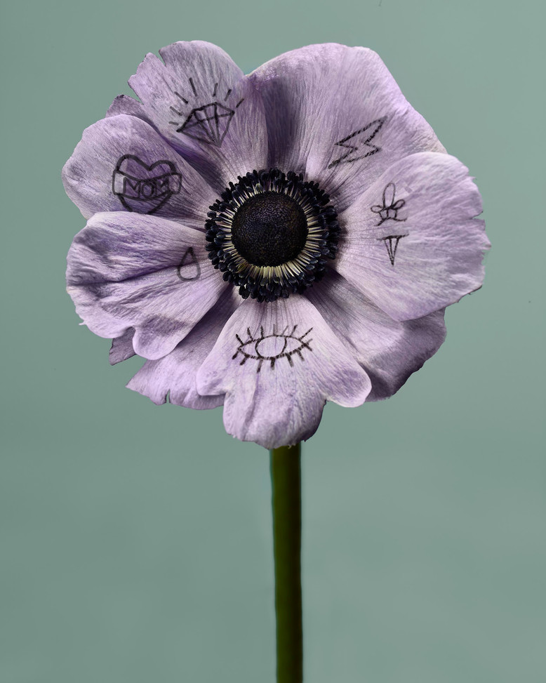 20201014_Flowers_Shot_06_PurpleAnenome_2