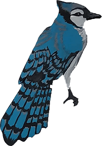 blue-jay.png