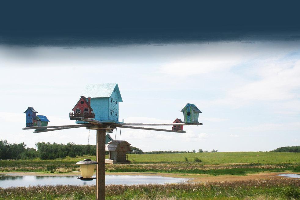 bird house pict.jpg