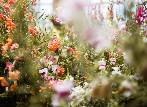Wintergardens I