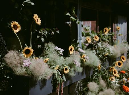 Flowering Wild PEC in photos