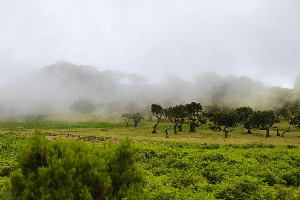 Fanal, a Floresta das Fadas\\ Fanal, the Fairy forest