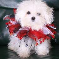 Dalia Christmas Cheer 8 mo-20121211-2311