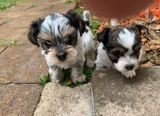 CBD dosages for your canine companion