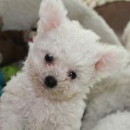 adorable puppy.JPG