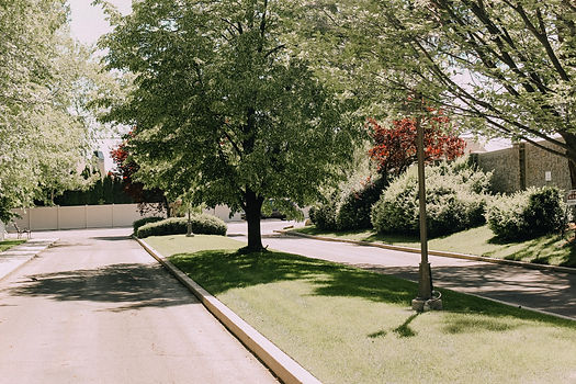 driveway with trees on the side road