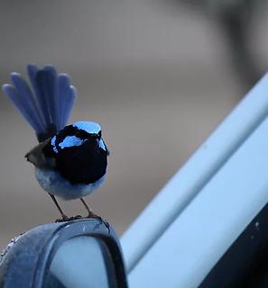 Birdwatching.webp