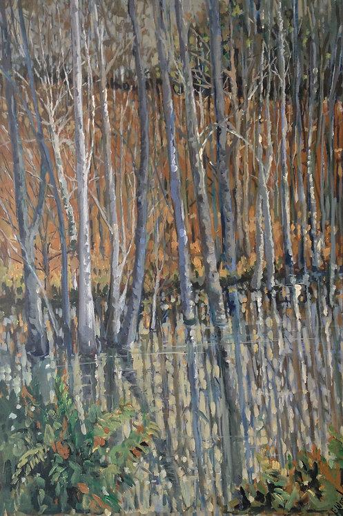 Birch Trees Standing In Water