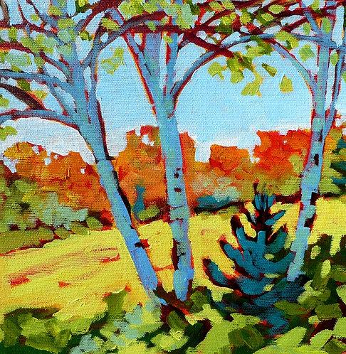 Birches - Murphy's Point #3