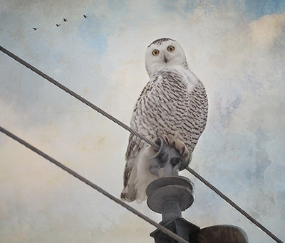 Wise Old Owl, Edition #3 of 25
