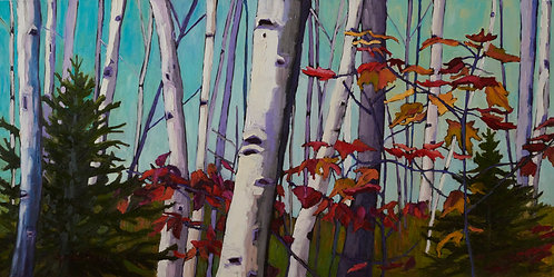 """Birch Trees and Fall Leaves- Collection 6- 60""""x 30"""""""