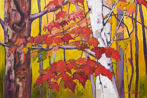 Birch Trees and Fall Leaves col.1