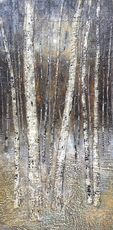 Shy Birches