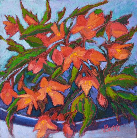 Dragonwing Begonia