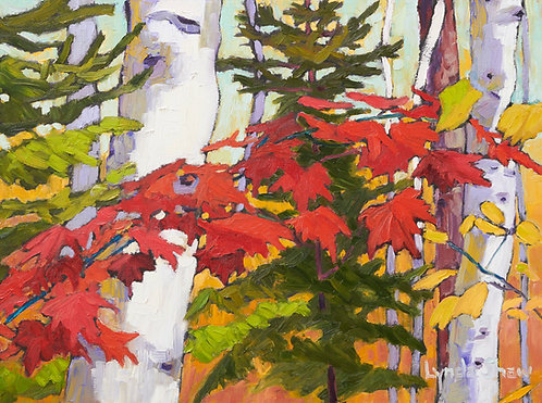 Birch Trees and Fall Leaves col.5