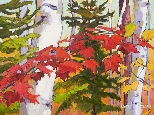 Birch Trees and Fall Leaves, Col.5