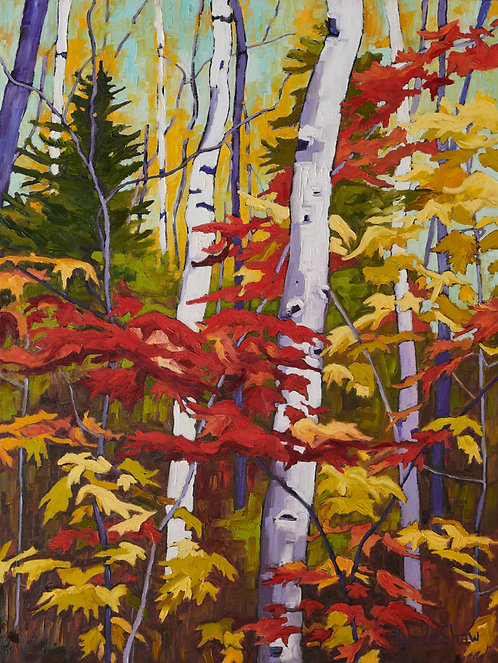 Birch Trees and Fall Leaves col.4