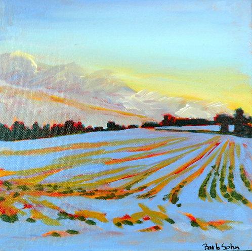 Sunset-Winter Cornfield