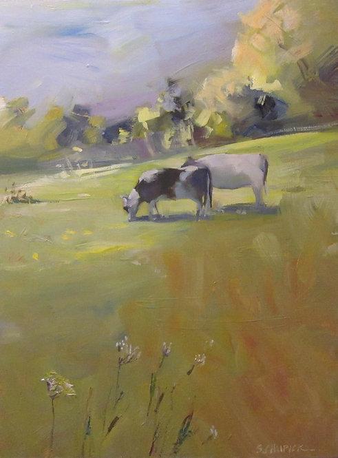 Cow Parsley