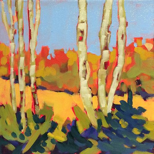 Birches 18-102