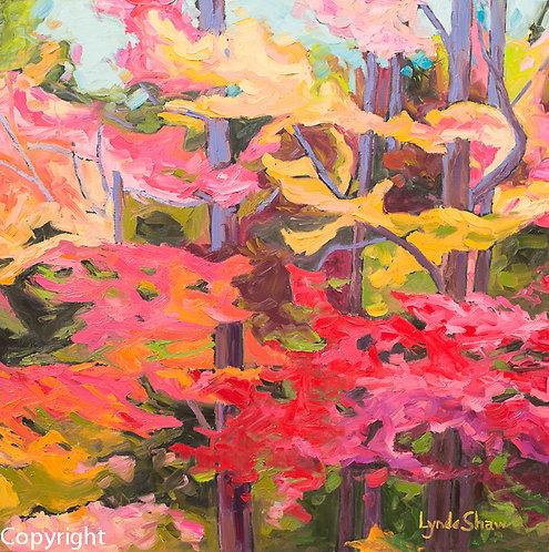 Autumn Maples, C.3