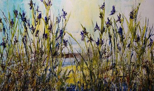 Where the Wild Iris Grows #16