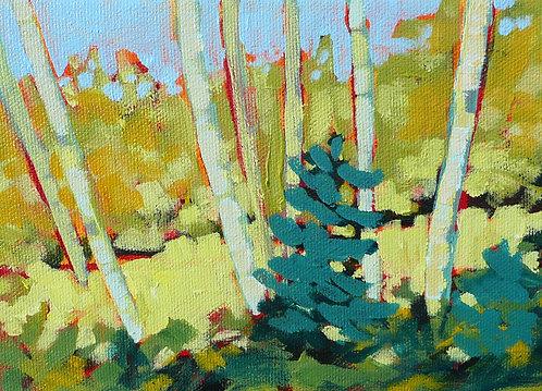 """Birches – Murphy's Point #3, 5x7"""""""