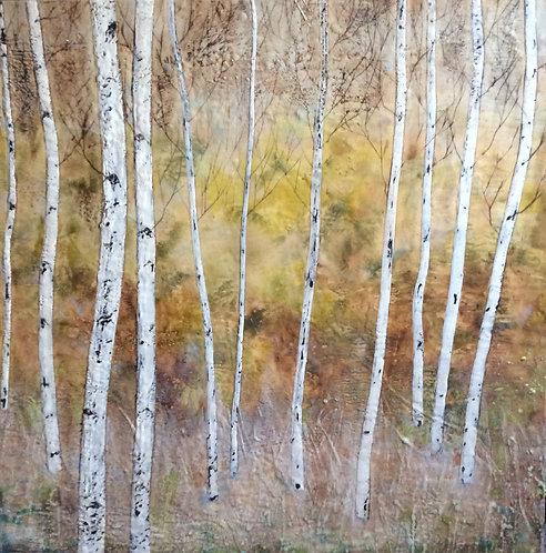 Fall Birches