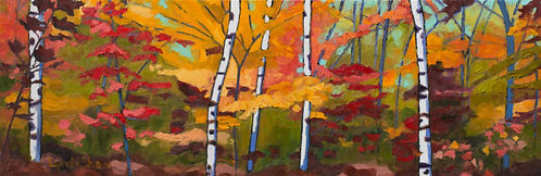 Algonquin Maples and Birch Trees, Collection 2