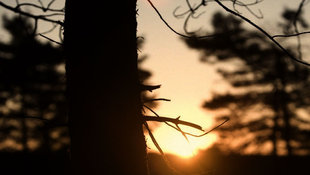 Nissan_Morning_Light_OK.jpg