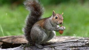 NATURAL VALLEY - Squirrel