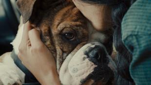 ETSY - Puppy