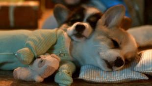 NY LOTTO - Sleepy Time
