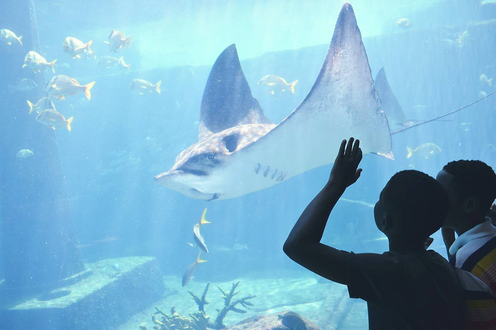 Underpriviledged children nature stingray marine education initiative