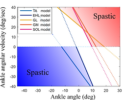 Joint spasticity modeling