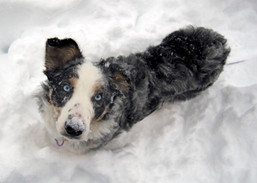 Mollie's First Snow Day