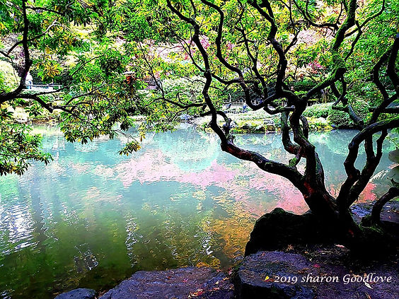 Braulttree_Wellness_Center.jpg